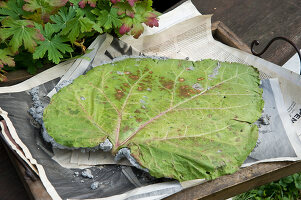Bildno.: 11018795<br/><b>Feature: 11018783 - Rhubarb to Go</b><br/>Home-made garden stepping stones made from rhubarb leaves<br />living4media / Casper-Zielonka, Susanne