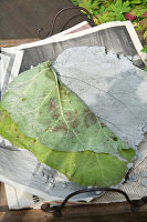 Bildno.: 11018801<br/><b>Feature: 11018783 - Rhubarb to Go</b><br/>Home-made garden stepping stones made from rhubarb leaves<br />living4media / Casper-Zielonka, Susanne