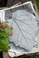 Bildno.: 11018803<br/><b>Feature: 11018783 - Rhubarb to Go</b><br/>Home-made garden stepping stones made from rhubarb leaves<br />living4media / Casper-Zielonka, Susanne