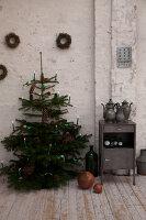 Bildnr.: 11101595<br/><b>Feature: 11101591 - Alternatives Weihnachten</b><br/>Warum muss es denn immer eine Nordmanntanne sein?<br />living4media / Grossmann.Schuerle