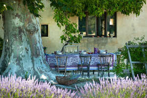 Bildno.: 11136453<br/><b>Feature: 11136451 - Bastide La Garance</b><br/>B &amp; B in beautiful Provence<br />living4media / Madamour, Christophe
