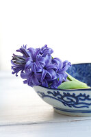 Bildno.: 11144885<br/><b>Feature: 11144875 - Hyacinths for Easter</b><br/>Blue, pink or white – hyacinths bring scent and sensibility to every table<br />living4media / Schindler, Martina