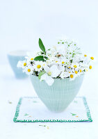 Bildno.: 11146867<br/><b>Feature: 11146866 - Daisies are Forever</b><br/>The common lawn daisy alone and combined with other flowers<br />living4media / Bauer, Christine