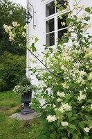 Bildno.: 11149555<br/><b>Feature: 11149551 - Elle Villa</b><br/>A Dream house in Oslo, Norway<br />living4media / Annette &amp; Christian