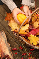 Bildno.: 11188291<br/><b>Feature: 11188280 - Autumn Magic</b><br/>The garden yields colourful leaves, nuts and fruit to decorate your home<br />living4media / Raider, Peter