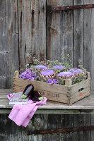 Bildnr.: 11195023<br/><b>Feature: 11194991 - Deko in Aubergine</b><br/>Was der Bauerngarten an Deko hergibt<br />living4media / Raider, Peter