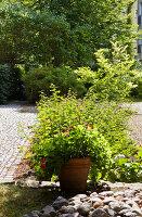 Bildnr.: 11205047<br/><b>Feature: 11205003 - Ambitioniertes Ambiente</b><br/>Haus einer Einrichtungsspezialistin in Berlin<br />living4media / Tuesday, June