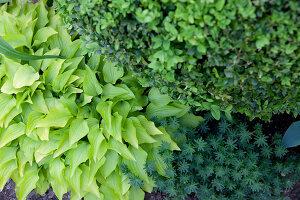 Bildno.: 11223669<br/><b>Feature: 11223659 - Green and Grand</b><br/>Romantic garden in Limburg, Belgium<br />living4media / Pietrek, Sibylle