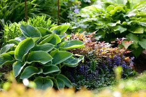 Bildno.: 11223689<br/><b>Feature: 11223659 - Green and Grand</b><br/>Romantic garden in Limburg, Belgium<br />living4media / Pietrek, Sibylle