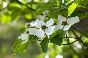 Bildno.: 11223699<br/><b>Feature: 11223659 - Green and Grand</b><br/>Romantic garden in Limburg, Belgium<br />living4media / Pietrek, Sibylle