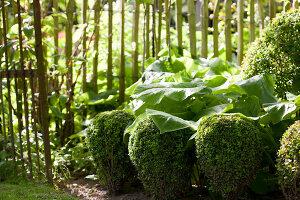 Bildno.: 11223705<br/><b>Feature: 11223659 - Green and Grand</b><br/>Romantic garden in Limburg, Belgium<br />living4media / Pietrek, Sibylle