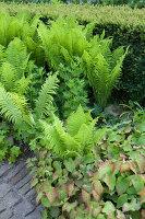 Bildnr.: 11223723<br/><b>Feature: 11223710 - Formvollendet</b><br/>Heerenhof, ein idyllischer Garten in Maastricht<br />living4media / Pietrek, Sibylle