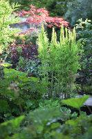 Bildnr.: 11223749<br/><b>Feature: 11223710 - Formvollendet</b><br/>Heerenhof, ein idyllischer Garten in Maastricht<br />living4media / Pietrek, Sibylle