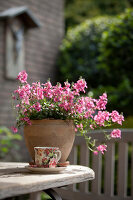 Bildno.: 11223857<br/><b>Feature: 11223835 - Woman's Touch</b><br/>Lush garden in the Netherlands<br />living4media / Pietrek, Sibylle