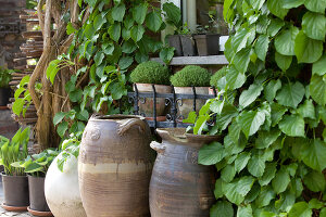 Bildno.: 11223861<br/><b>Feature: 11223835 - Woman's Touch</b><br/>Lush garden in the Netherlands<br />living4media / Pietrek, Sibylle