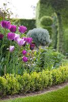 Bildno.: 11223865<br/><b>Feature: 11223835 - Woman's Touch</b><br/>Lush garden in the Netherlands<br />living4media / Pietrek, Sibylle