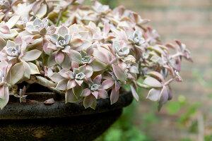 Bildno.: 11223867<br/><b>Feature: 11223835 - Woman's Touch</b><br/>Lush garden in the Netherlands<br />living4media / Pietrek, Sibylle