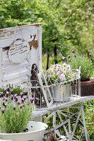 Bildno.: 11233293<br/><b>Feature: 11233253 - The Romantic Garden</b><br/>A shabby chic approach to gardening<br />living4media / Raider, Peter