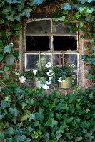 Bildno.: 11263425<br/><b>Feature: 11263422 - Garden Dreams</b><br/>Romantic garden near Cologne<br />living4media / Bauer, Christine