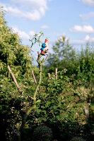 Bildno.: 11263437<br/><b>Feature: 11263422 - Garden Dreams</b><br/>Romantic garden near Cologne<br />living4media / Bauer, Christine