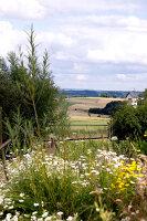 Bildno.: 11263455<br/><b>Feature: 11263422 - Garden Dreams</b><br/>Romantic garden near Cologne<br />living4media / Bauer, Christine