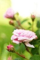 Bildno.: 11271963<br/><b>Feature: 11271958 - Swedish Garden</b><br/>Garden in Lynga<br />living4media / M&#246;ller, Cecilia