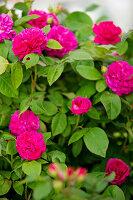 Bildno.: 11271965<br/><b>Feature: 11271958 - Swedish Garden</b><br/>Garden in Lynga<br />living4media / M&#246;ller, Cecilia