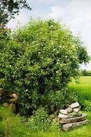 Bildno.: 11271969<br/><b>Feature: 11271958 - Swedish Garden</b><br/>Garden in Lynga<br />living4media / M&#246;ller, Cecilia