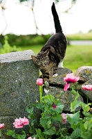 Bildno.: 11271989<br/><b>Feature: 11271958 - Swedish Garden</b><br/>Garden in Lynga<br />living4media / M&#246;ller, Cecilia