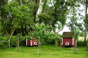 Bildno.: 11271997<br/><b>Feature: 11271958 - Swedish Garden</b><br/>Garden in Lynga<br />living4media / M&#246;ller, Cecilia