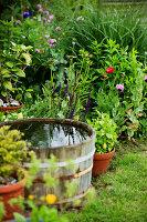 Bildno.: 11271999<br/><b>Feature: 11271958 - Swedish Garden</b><br/>Garden in Lynga<br />living4media / M&#246;ller, Cecilia