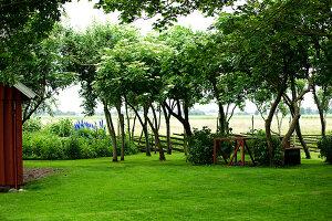 Bildno.: 11272015<br/><b>Feature: 11271958 - Swedish Garden</b><br/>Garden in Lynga<br />living4media / M&#246;ller, Cecilia