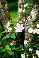 Bildno.: 11272017<br/><b>Feature: 11271958 - Swedish Garden</b><br/>Garden in Lynga<br />living4media / M&#246;ller, Cecilia