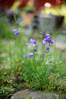 Bildno.: 11272027<br/><b>Feature: 11271958 - Swedish Garden</b><br/>Garden in Lynga<br />living4media / M&#246;ller, Cecilia