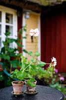 Bildno.: 11272031<br/><b>Feature: 11271958 - Swedish Garden</b><br/>Garden in Lynga<br />living4media / M&#246;ller, Cecilia