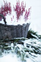 Bildno.: 11282245<br/><b>Feature: 11282243 - Home for Christmas</b><br/>Christmas decorating Swedish style<br />living4media / IBL Bildbyra AB / Angelica, S&#246;derberg