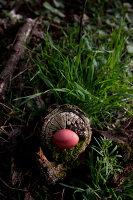 Bildnr.: 11303633<br/><b>Feature: 11303626 - Farbpalette der Natur</b><br/>Ostereier mit Naturprodukten f&#228;rben<br />living4media / L&#246;scher, Sabine