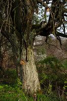 Bildnr.: 11303639<br/><b>Feature: 11303626 - Farbpalette der Natur</b><br/>Ostereier mit Naturprodukten f&#228;rben<br />living4media / L&#246;scher, Sabine