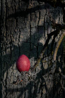 Bildnr.: 11303641<br/><b>Feature: 11303626 - Farbpalette der Natur</b><br/>Ostereier mit Naturprodukten f&#228;rben<br />living4media / L&#246;scher, Sabine