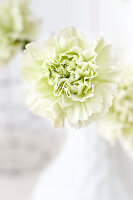 Bildno.: 11305859<br/><b>Feature: 11305840 - The Greening Touch</b><br/>Green flowers add a special kick to any room<br />living4media / Weber, Cornelia