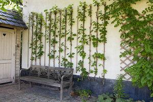 Bildnr.: 11306133<br/><b>Feature: 11306129 - Die feine englische Art</b><br/>Traumgarten im Englischen Stil, Belgien<br />living4media / Herwig, Modeste