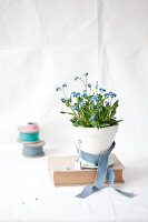 Bildno.: 11326221<br/><b>Feature: 11326207 - Forget-Me-Not</b><br/>Create your own beautiful arrangements using forget-me-nots<br />living4media / Weber, Cornelia