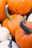 Bildno.: 11345899<br/><b>Feature: 11345897 - Pumpkin Party</b><br/>Pumpkins and Jack-o&#39;-Lanterns<br />living4media / Klazinga, Jansje
