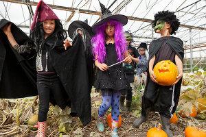 Bildno.: 11345937<br/><b>Feature: 11345897 - Pumpkin Party</b><br/>Pumpkins and Jack-o&#39;-Lanterns<br />living4media / Klazinga, Jansje