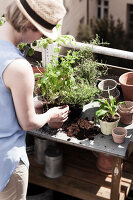 Bildno.: 11374539<br/><b>Feature: 11374522 - City Gardening</b><br/>All you need is a balcony and a few pots to grow your favourite foods<br />living4media / Eising Studio - Food Photo &amp; Video