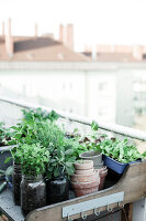 Bildno.: 11374541<br/><b>Feature: 11374522 - City Gardening</b><br/>All you need is a balcony and a few pots to grow your favourite foods<br />living4media / Eising Studio - Food Photo &amp; Video