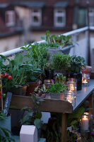 Bildno.: 11374545<br/><b>Feature: 11374522 - City Gardening</b><br/>All you need is a balcony and a few pots to grow your favourite foods<br />living4media / Eising Studio - Food Photo &amp; Video
