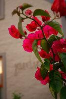 Bildno.: 11383149<br/><b>Feature: 11383132 - Indigenous Garden</b><br/>Low-maintenance country garden in Hartbeespoort<br />living4media / Great Stock!