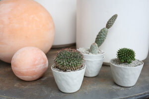 Bildno.: 11405013<br/><b>Feature: 11405009 - Urban Gardeners</b><br/>San Francisco nursery specializes in cacti and bromeliads<br />living4media / Bayle Doetch