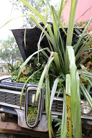 Bildno.: 11405015<br/><b>Feature: 11405009 - Urban Gardeners</b><br/>San Francisco nursery specializes in cacti and bromeliads<br />living4media / Bayle Doetch